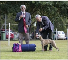 Anastasia Runner Up in Show at the  Qld Sighthound Association Show at just seven months